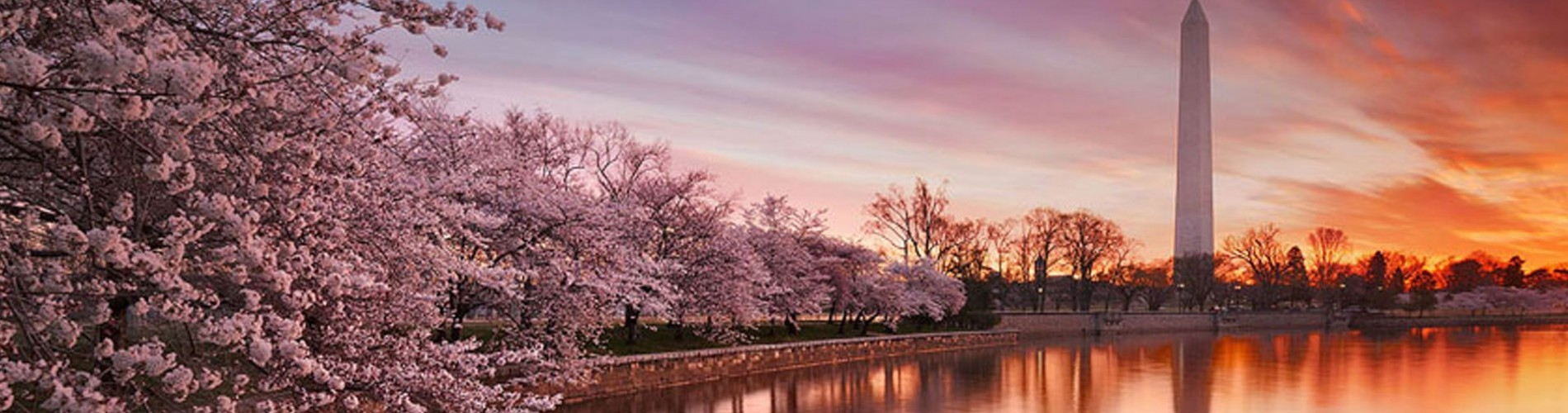 DC Tidal Basin with cherry blossoms