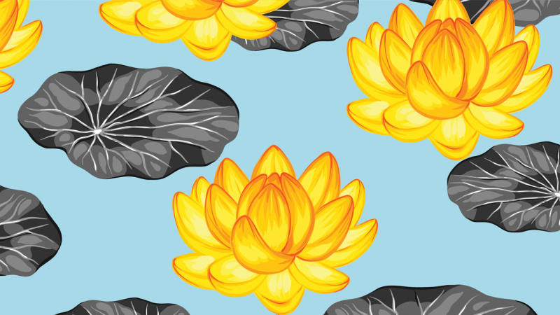pond lilies and leaves on a blue background