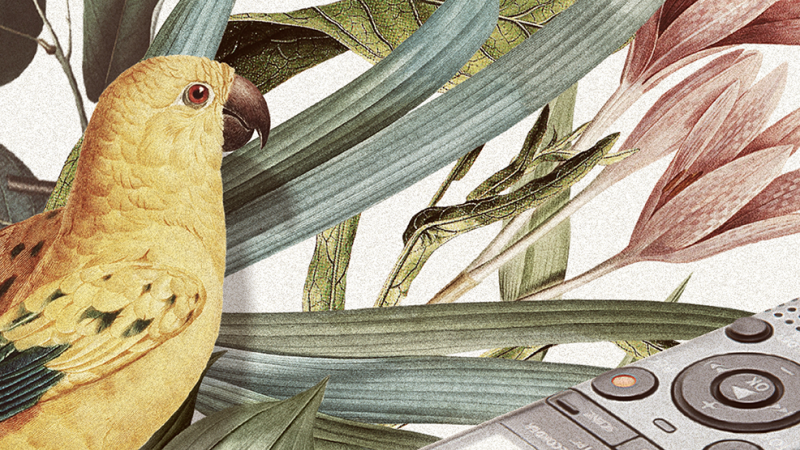 Header image showing illustrations of parrot and a recorder