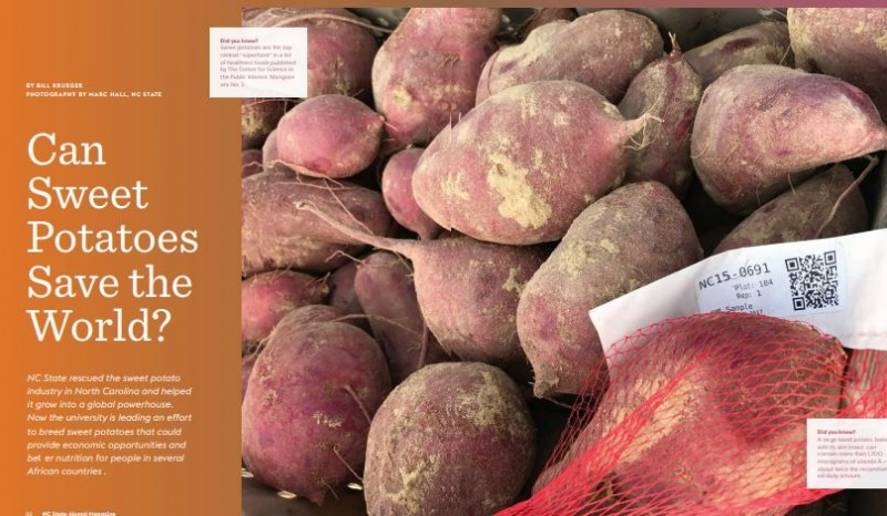 """Can Sweet Potatoes Save the World?"" NC State Alumni Magazine, Winter 2018"